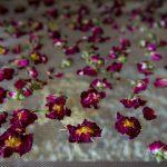 Fleurs séchées à la ferme du Cabrit au lait